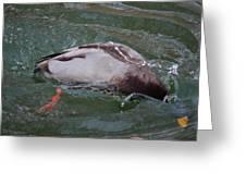 Duck Bathing Series 2 Greeting Card by Craig Hosterman