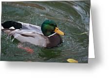 Duck Bathing Series 3 Greeting Card by Craig Hosterman