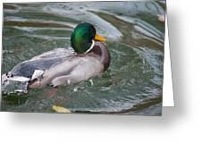 Duck Bathing Series 5 Greeting Card