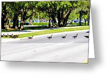 Duck Crossing Greeting Card