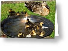 Duck Family Joy In Garden  Greeting Card