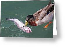 Duck Fishing Greeting Card