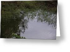 Duck In A Pond Greeting Card