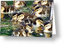 Duck-pile Greeting Card