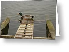 Duck Ramp Greeting Card