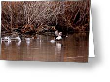 Duck - Ring-necked - Runway Greeting Card