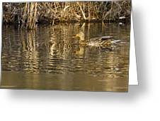Duck Ripples Greeting Card