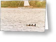 Duck Sailing Greeting Card