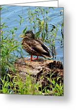 Duck Season Greeting Card