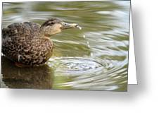 Duck Spits Greeting Card
