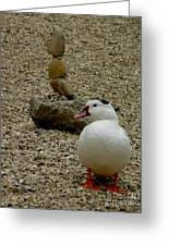 Duck With Rock Sculpture Greeting Card