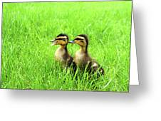Duckling Chatter Greeting Card