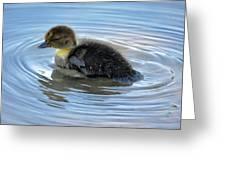 Duckling Pool Greeting Card