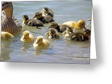 Ducklings 09 Greeting Card