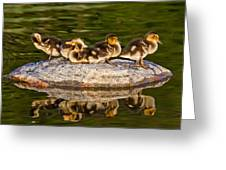 Ducklings Catch Some Rays Greeting Card