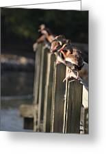 Ducks Ducks Ducks Greeting Card