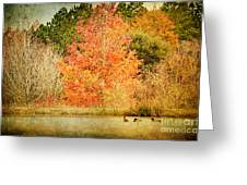 Ducks In An Autumn Pond Greeting Card