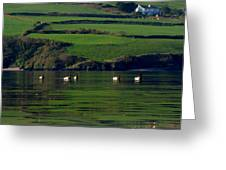 Ducks In Dingle Harbour Greeting Card