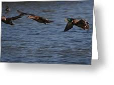 Ducks In Flight 1 Greeting Card