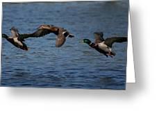 Ducks In Flight 2 Greeting Card