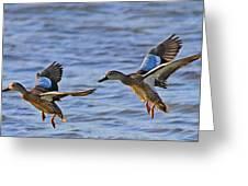 Ducks In Flight Greeting Card