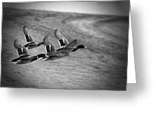 Ducks In Flight V2 Bw Greeting Card