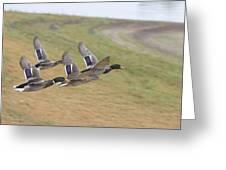 Ducks In Flight V3 Greeting Card