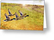 Ducks In Flight V4 Greeting Card
