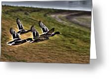 Ducks In Flight V5  Greeting Card