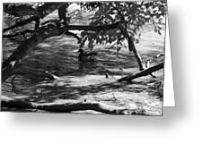 Ducks In The Shade In Black And White Greeting Card