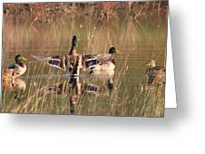 Ducks Of Douglas Greeting Card