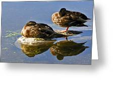 Ducks On A Spring Morning Greeting Card