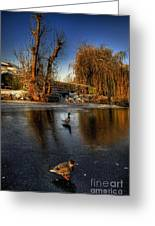 Ducks On Ice Greeting Card