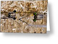 Ducks Reflect On The Days Events Greeting Card