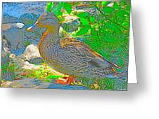 Duckside Greeting Card