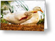 Ducky - Say It Again Please Greeting Card