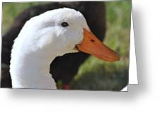 Duey The Duck Greeting Card