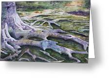 Dunbar Cave Roots  Greeting Card by Patsy Sharpe