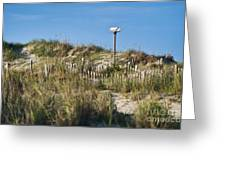 Dune Bird House Greeting Card