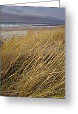 Dune Grass On The Oregon Coast Greeting Card