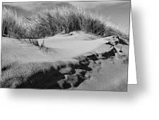 Dunes On A Staten Island Beach Greeting Card