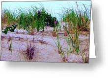 Dunes Greeting Card by Susan Carella