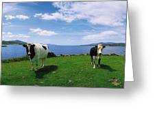 Durrus, Sheeps Head, Co Cork, Ireland Greeting Card