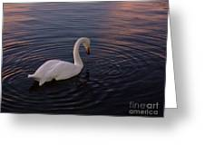 Dusk Swan Greeting Card
