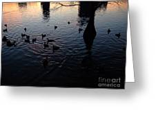 Dusk With Ducks Greeting Card