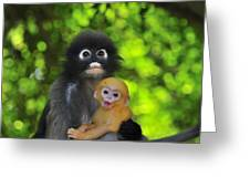 Dusky Leaf Monkey And Baby Greeting Card