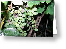 Dusty Grapes Greeting Card