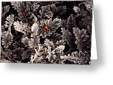 Dusty Miller  Greeting Card