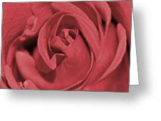 Dusty Rose Greeting Card