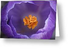Dutch Crocus Crocus Vernus Flower Greeting Card